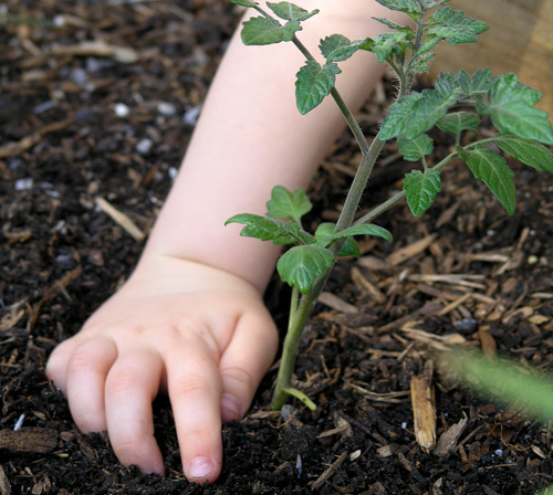 growing vegetables with children