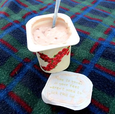 yoplait yoghurt