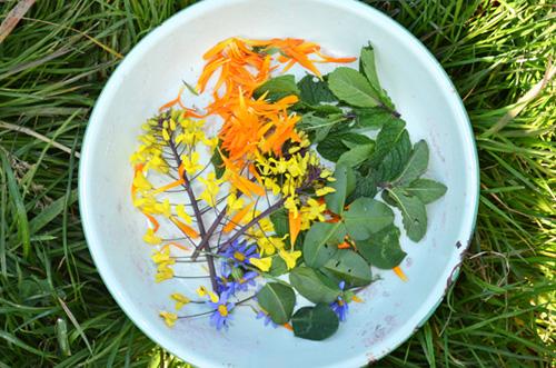 plants for childrens gardens