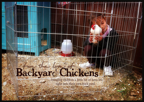 For the Love of Backyard Chickens