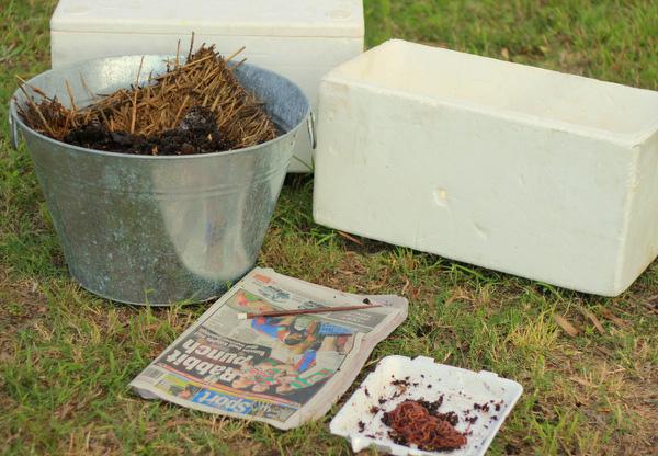 Worm farm how to