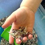 Childhood 101 Sensory Rosemary Rice Play Activity