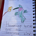 Outdoor Literacy Ideas-Field Guides