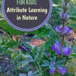 Attributes in Nature - flower