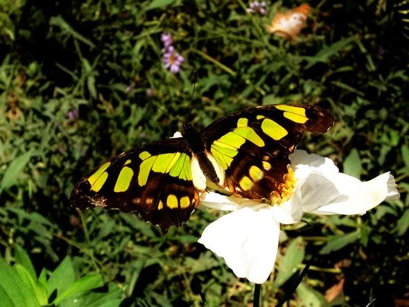 Butterfly Symmetry Art - Butterfly